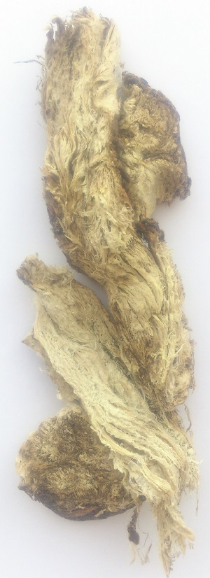 Корен ферулы джунгарской (омика), применение, свойства, рецепты, противопоказания