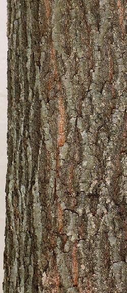 Использование коры дуба для уменьшения влагалища