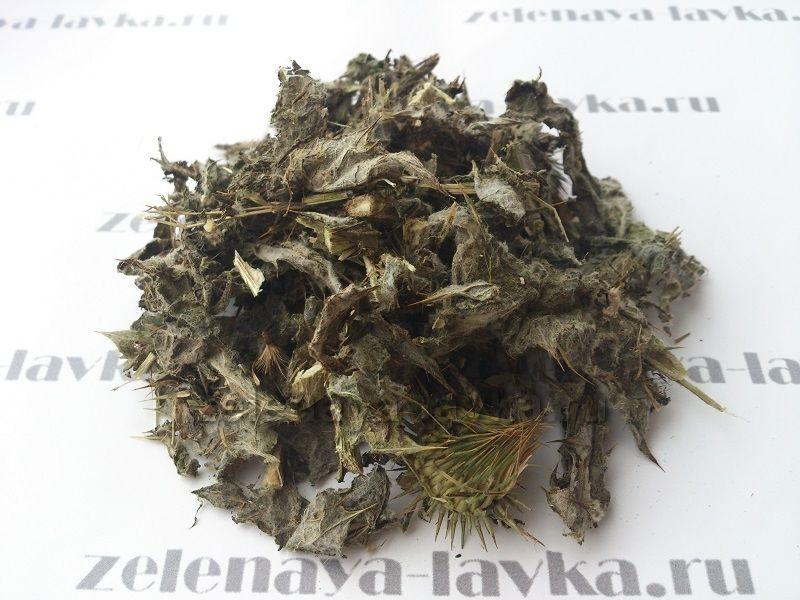 татарник трава